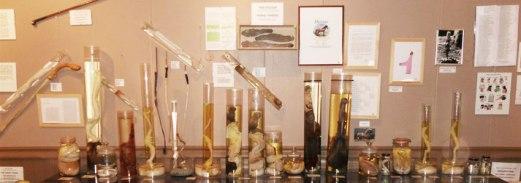 phallus-museum-iceland