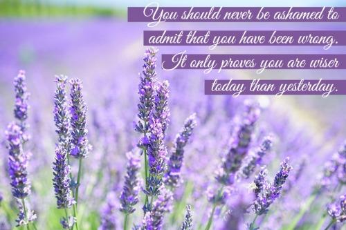 lavender-blossom-1595581_960_720