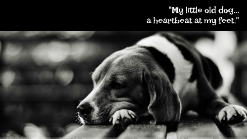 cute-dog-sleeping-black-n-white-picture-wallpaper-2